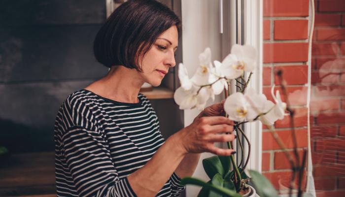 Slik får du orkideene dine til å blomstre som aldri før